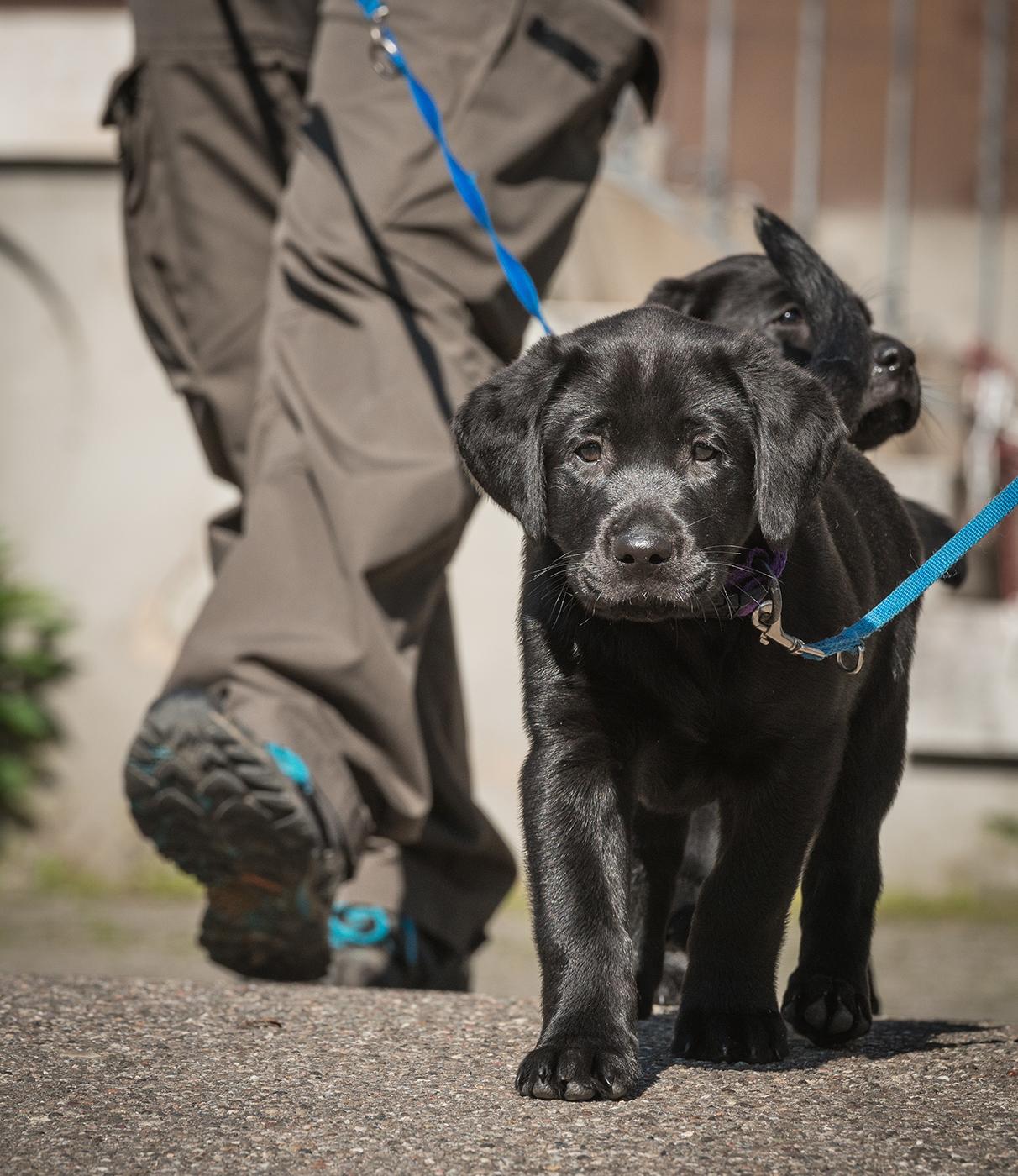 Blindenführhundeschule Allschwil